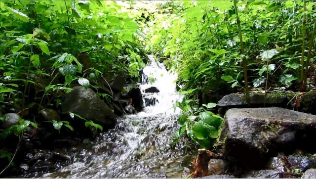 Cool Mountain Stream Relaxing Nature Meditation